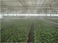 蔬菜大棚种植喷雾加湿系统