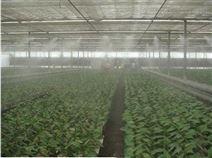 大棚微雾降温系统