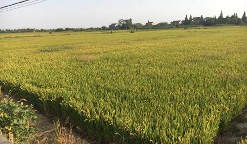 """推進""""三農""""事業發展 農業機械化不可或缺"""
